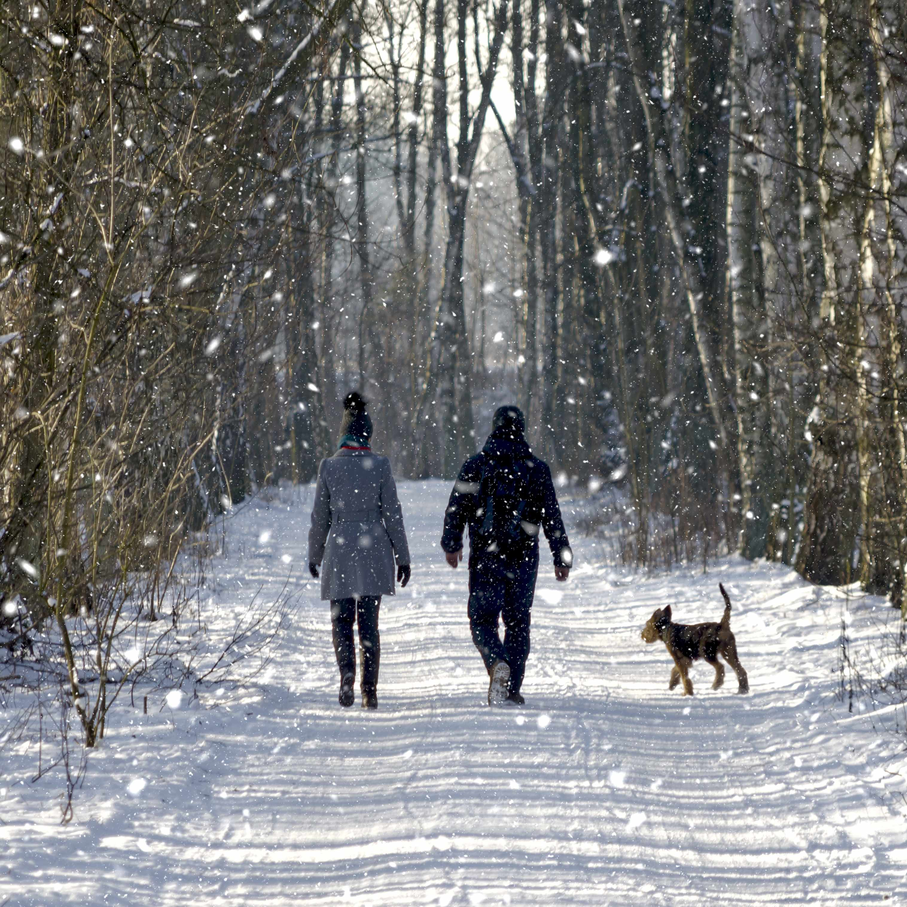 a woman, man and dog walking down a snowy path in the woods