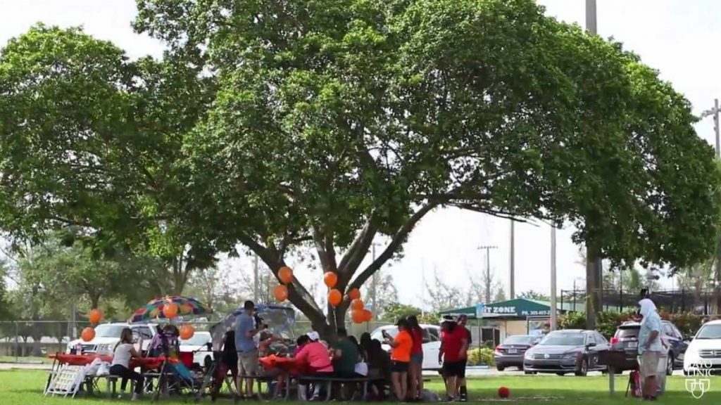 a family having a picnic under a tree in a local park