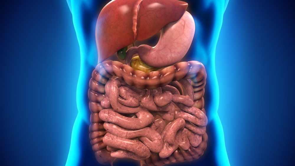 Ilustración del sistema digestivo humano
