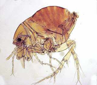 an image of an unidentified parasite from the Parasite Wonders blog