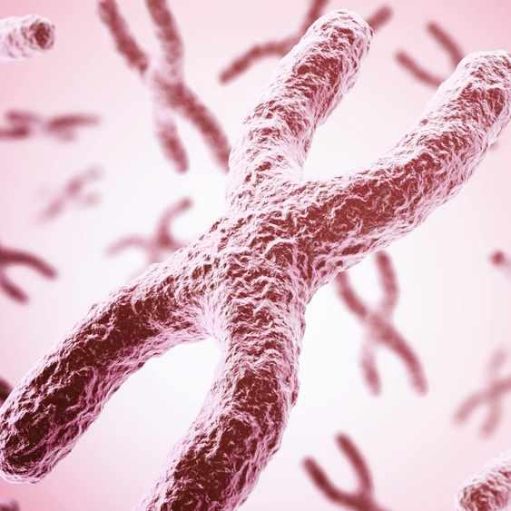 Illustration of chromosome mate pair