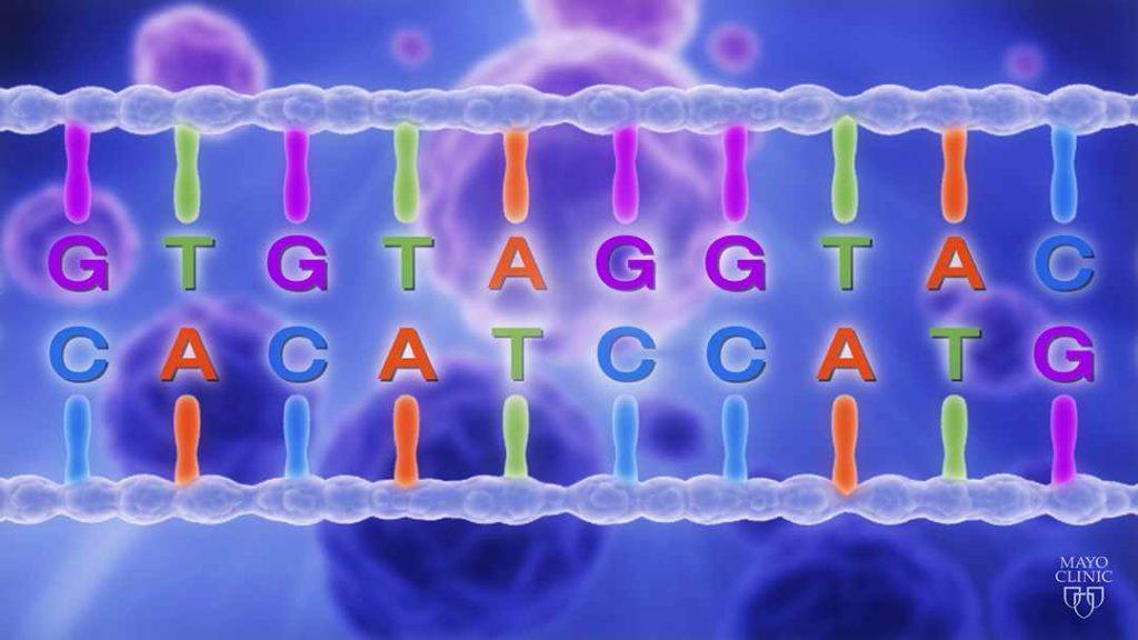 Representación gráfica de una hebra de ADN en la que se resaltan las cuatro letras bases: G, C, A y T