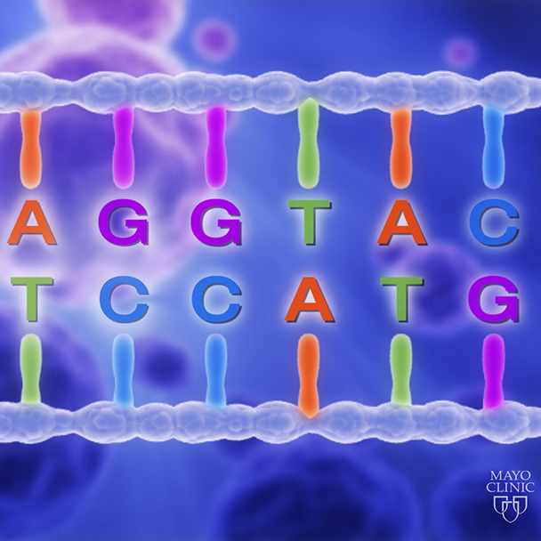 a graphic representation of a strand of DNA, highlighting the four base letters - G, C, A and T