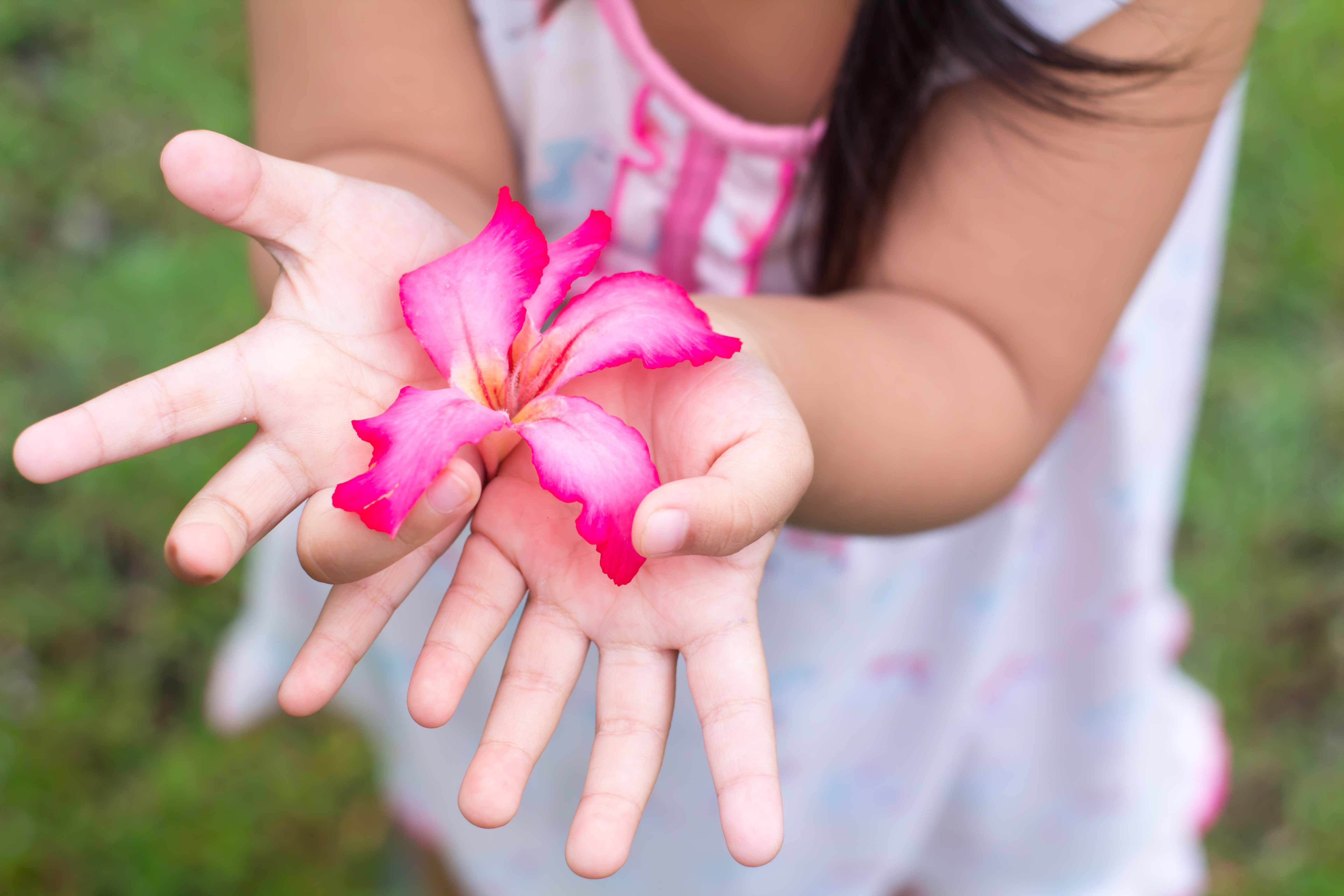 a young girl gently holding a bright pink flower in her hands and offering it like a gift