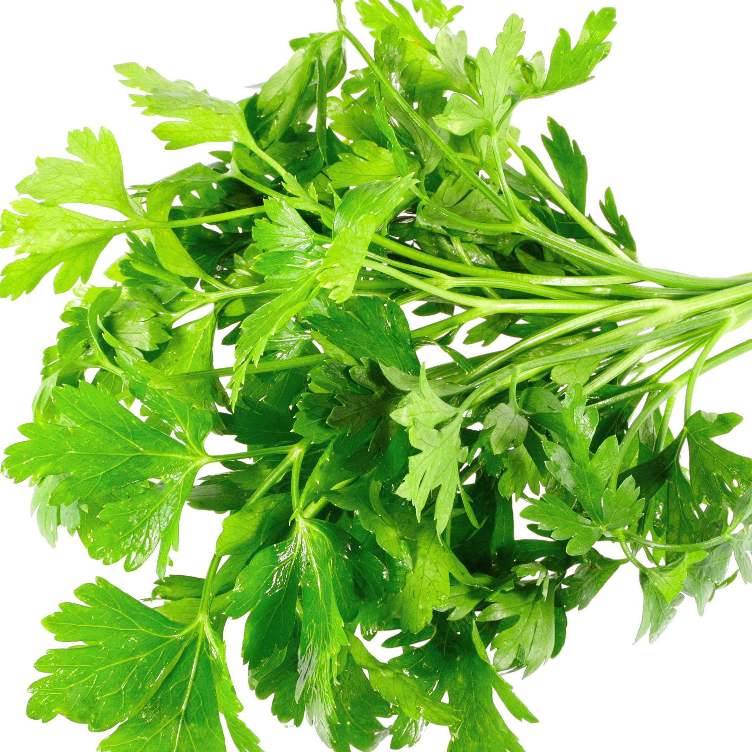 sprigs of bright green parsley, herbs