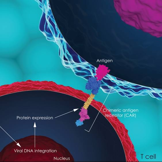 3D illustration of CAR T-cell therapy