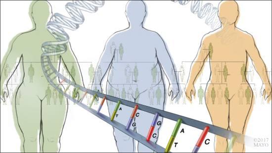 Ilustración médica de la relación entre la genética y la obesidad