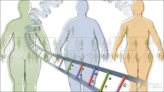 a medical illustration of the relationship between genetics and obesity
