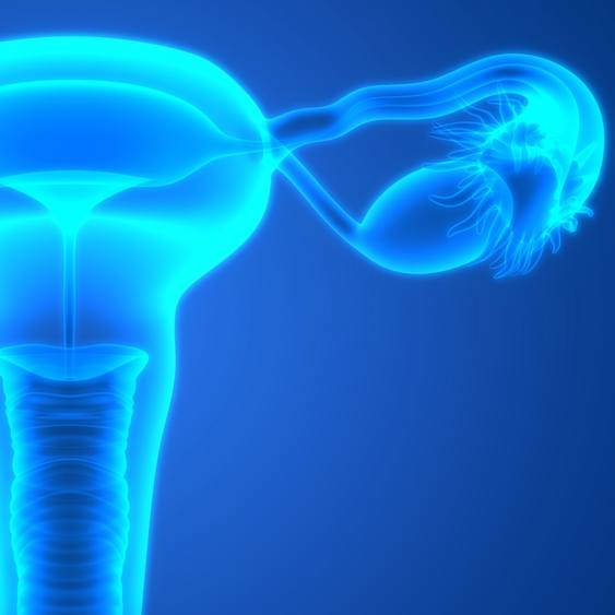 3D image of the female reproductive system
