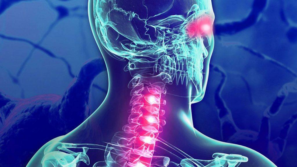 Imagen tridimensional de la médula espinal en el cuello