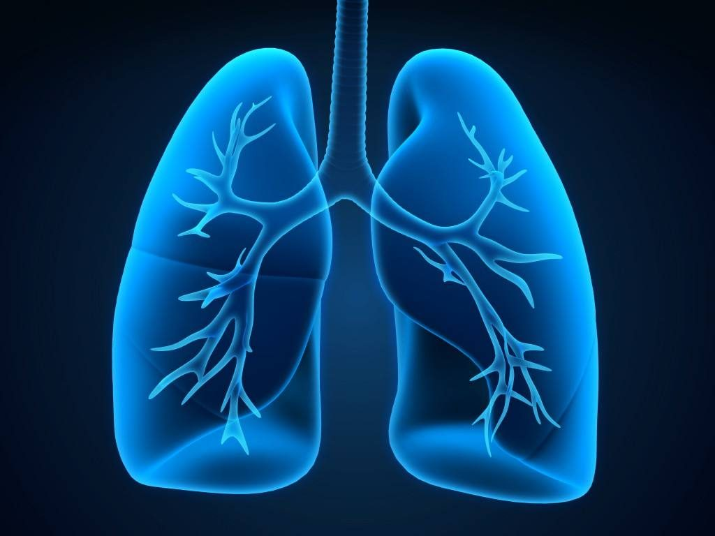 a medical illustration of lungs