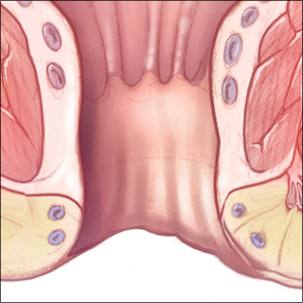 a medical illustration of normal anal anatomy
