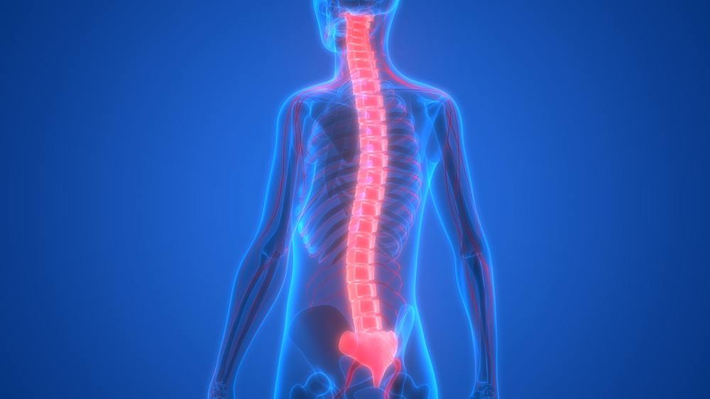 Esqueleto humano con el sistema nervioso (médula espinal) resaltado