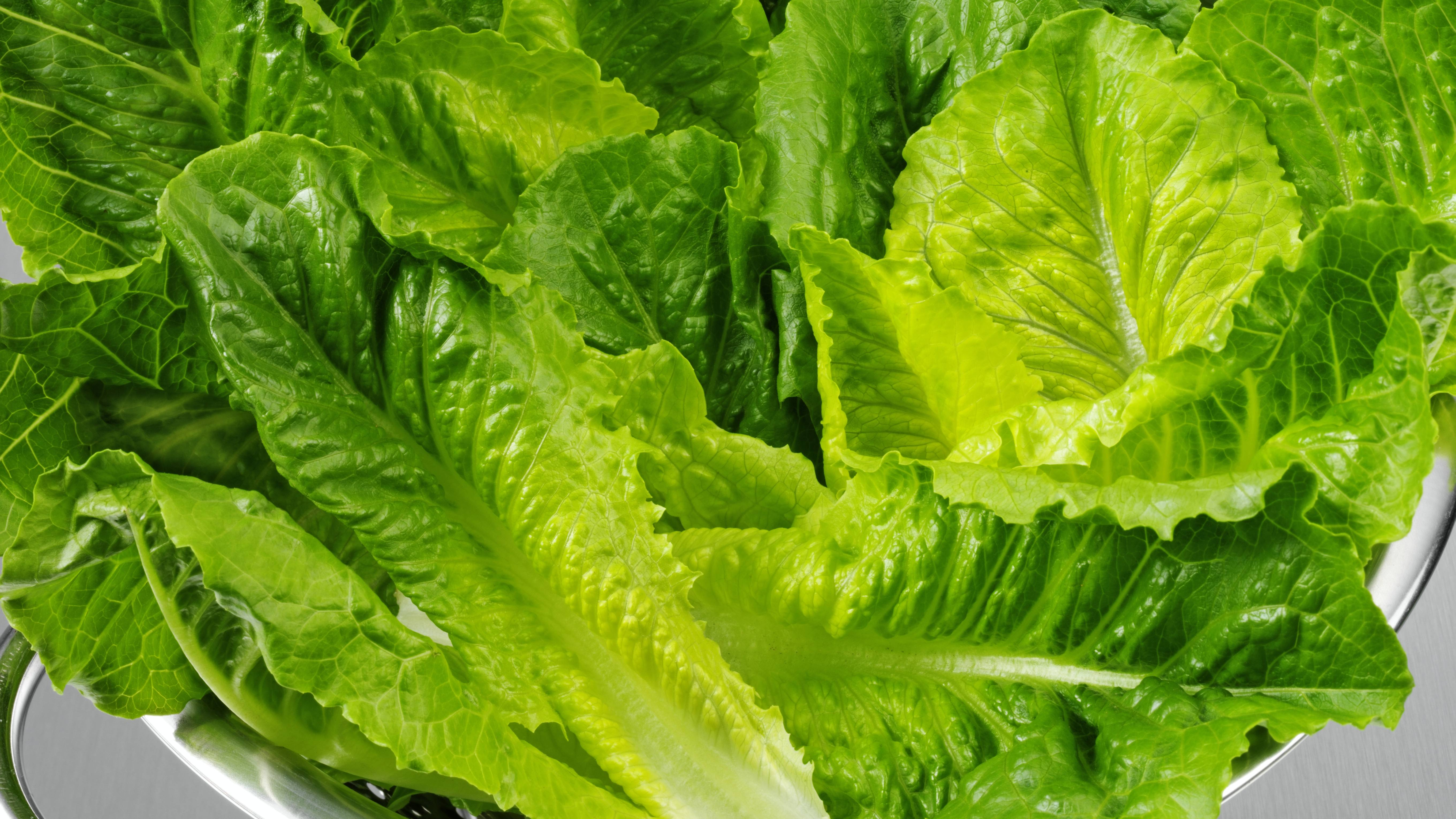 a collander bowl filled with fresh romaine lettuces leaves