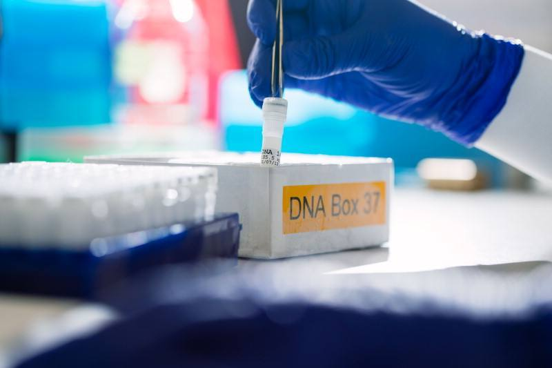 blue glove covered hand of laboratory researcher working with DNA tubes