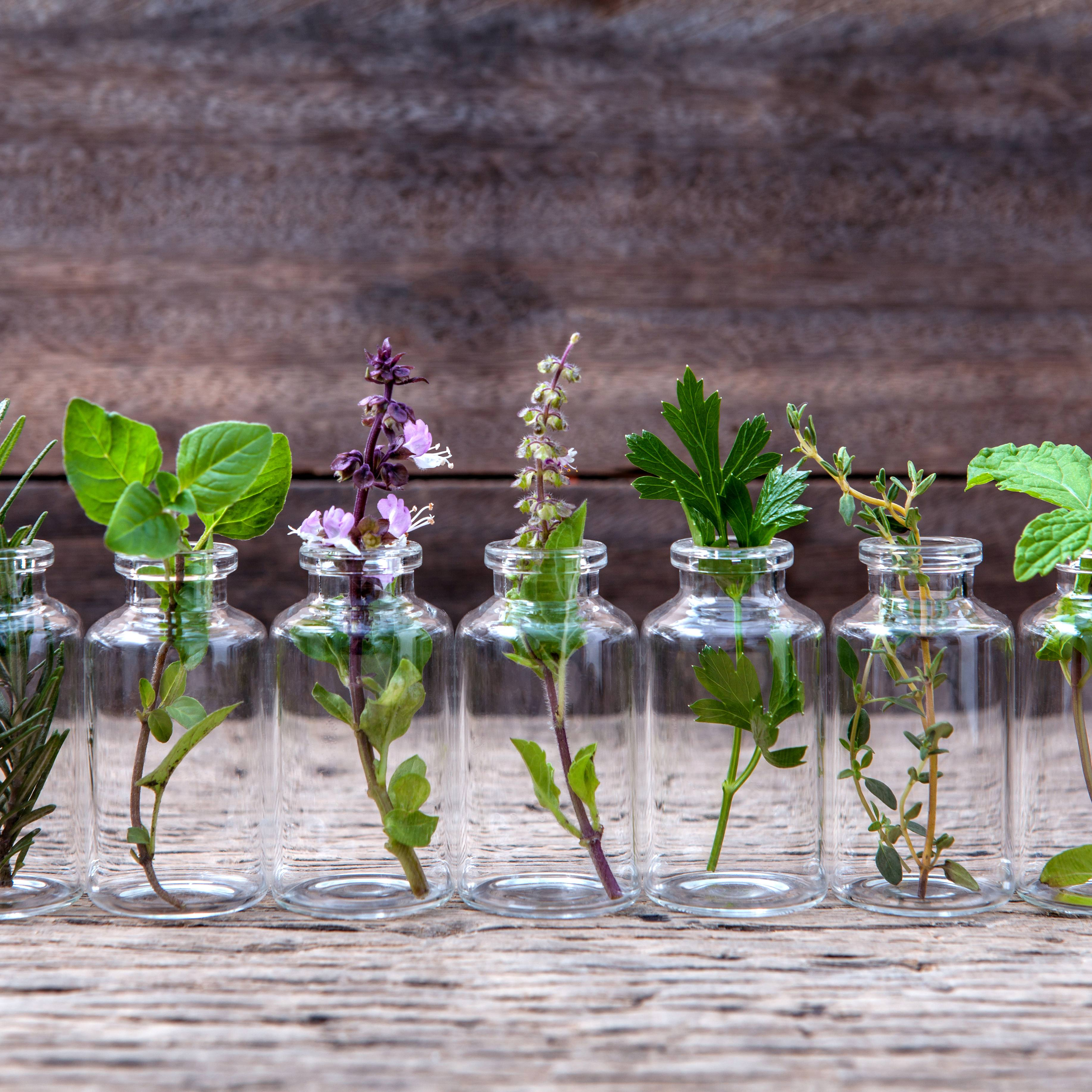 a row of small, clear glass bottles on a wooden surface, with a sprig of an herb or plant in each