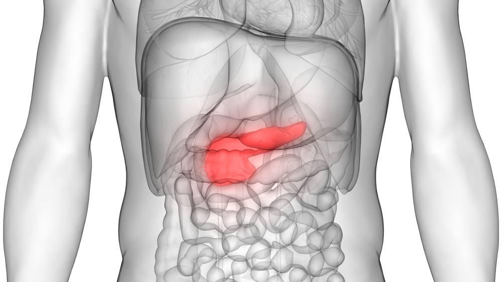 Imagen tridimensional de los órganos del cuerpo humano con el páncreas resaltado