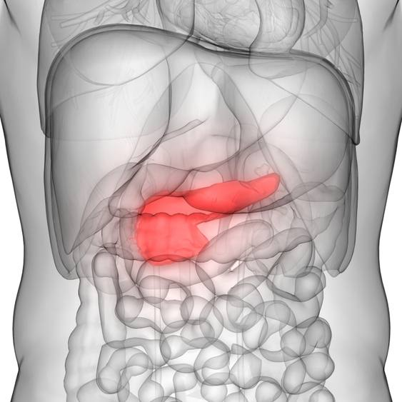 3D image of human body organs with the pancreas highlighted