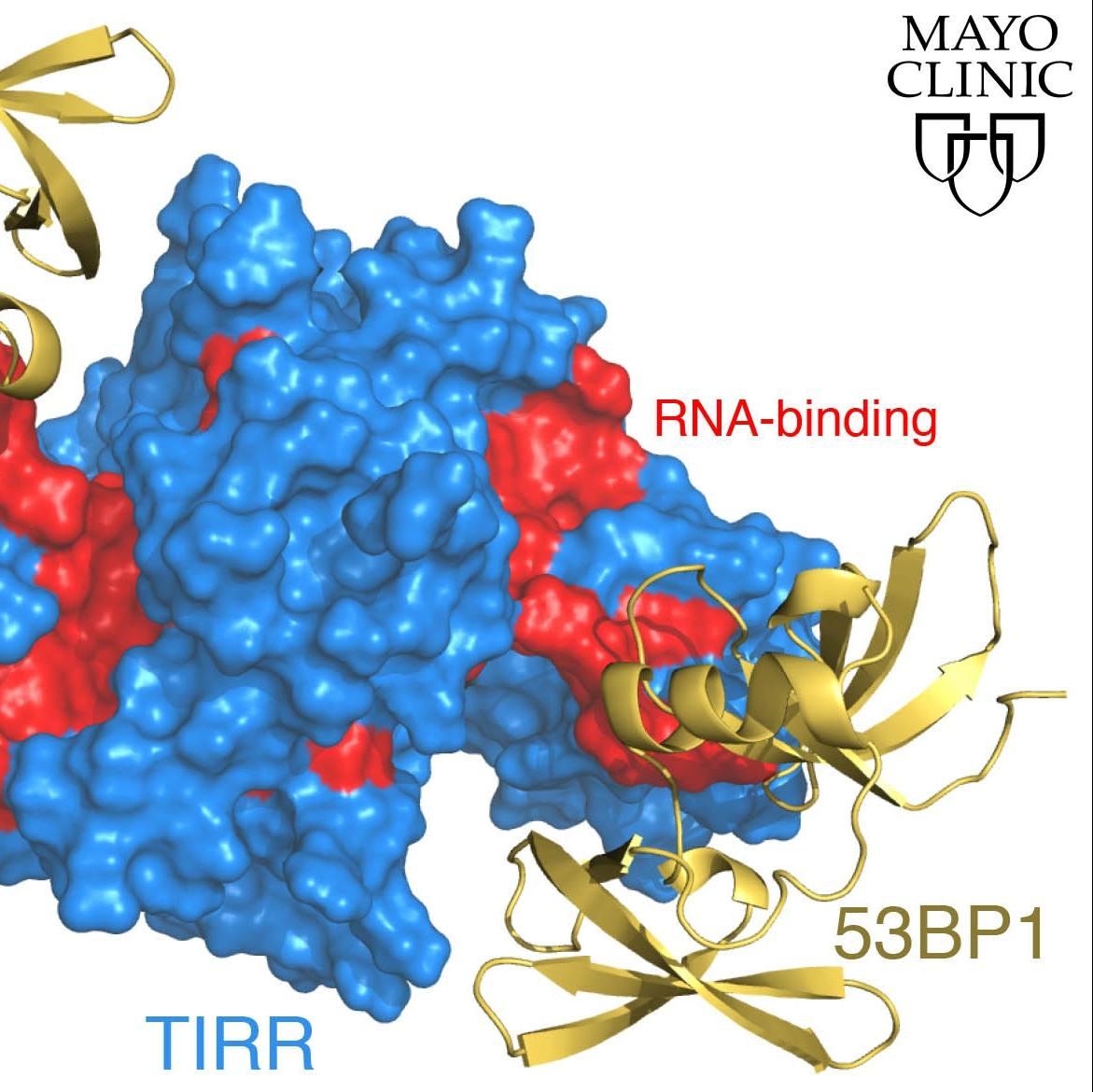 3-D image of damaged DNA