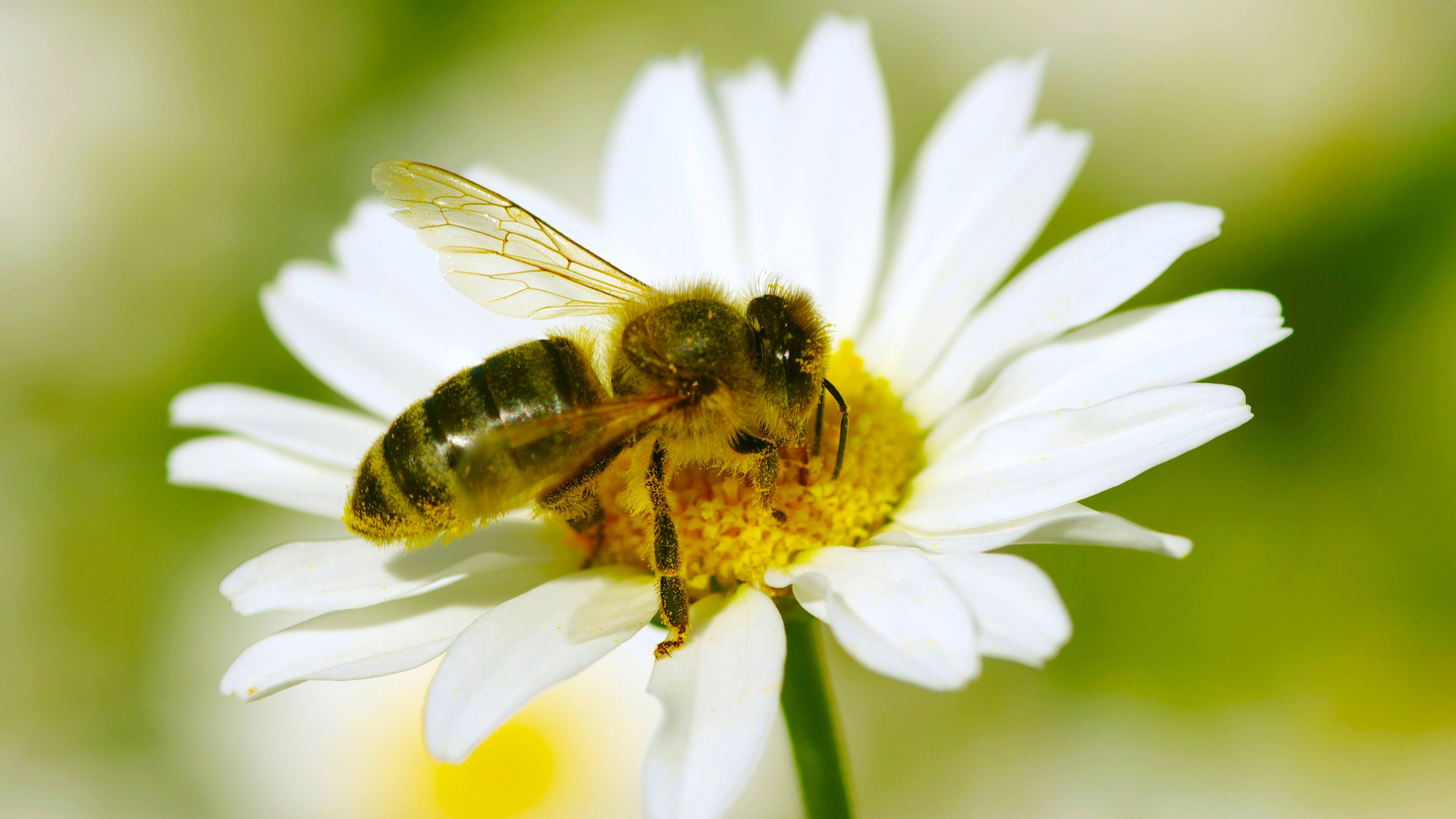 a bee taking pollen from a flower