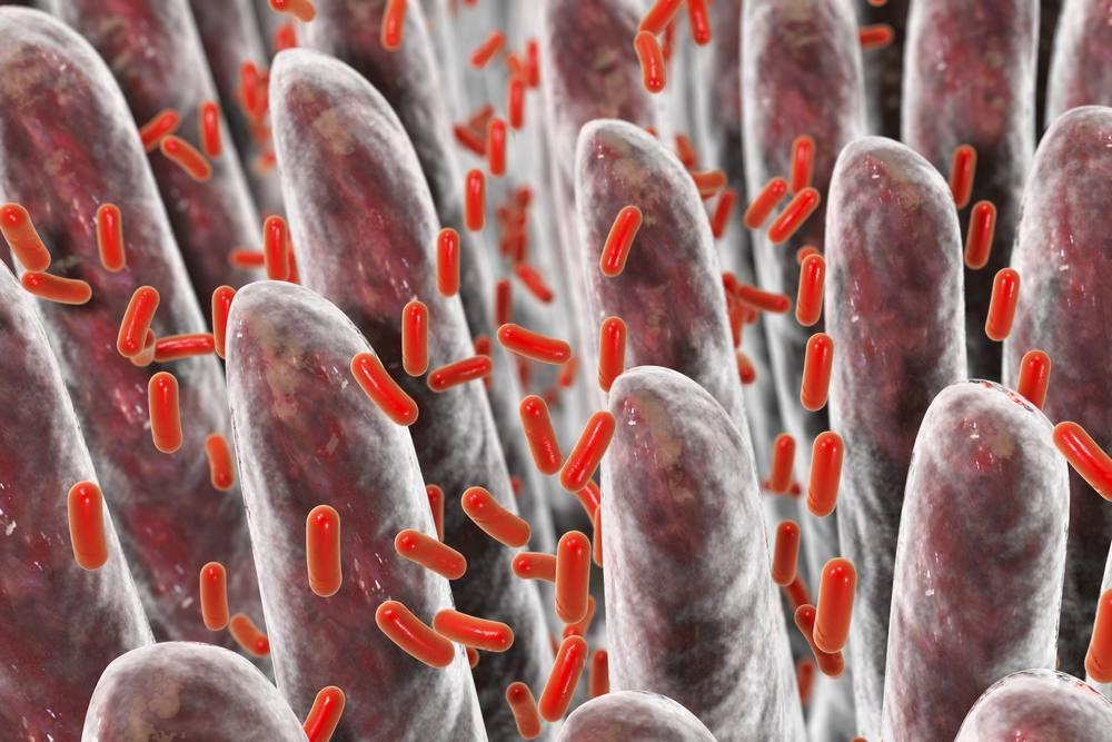 3D illustration of human intestine with intestinal bacteria