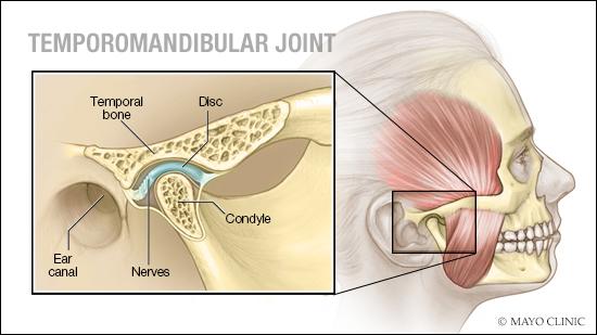Ilustración médica de la articulación temporomandibular