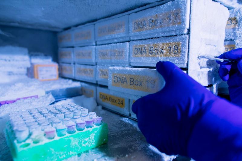 frozen DNA test tubes