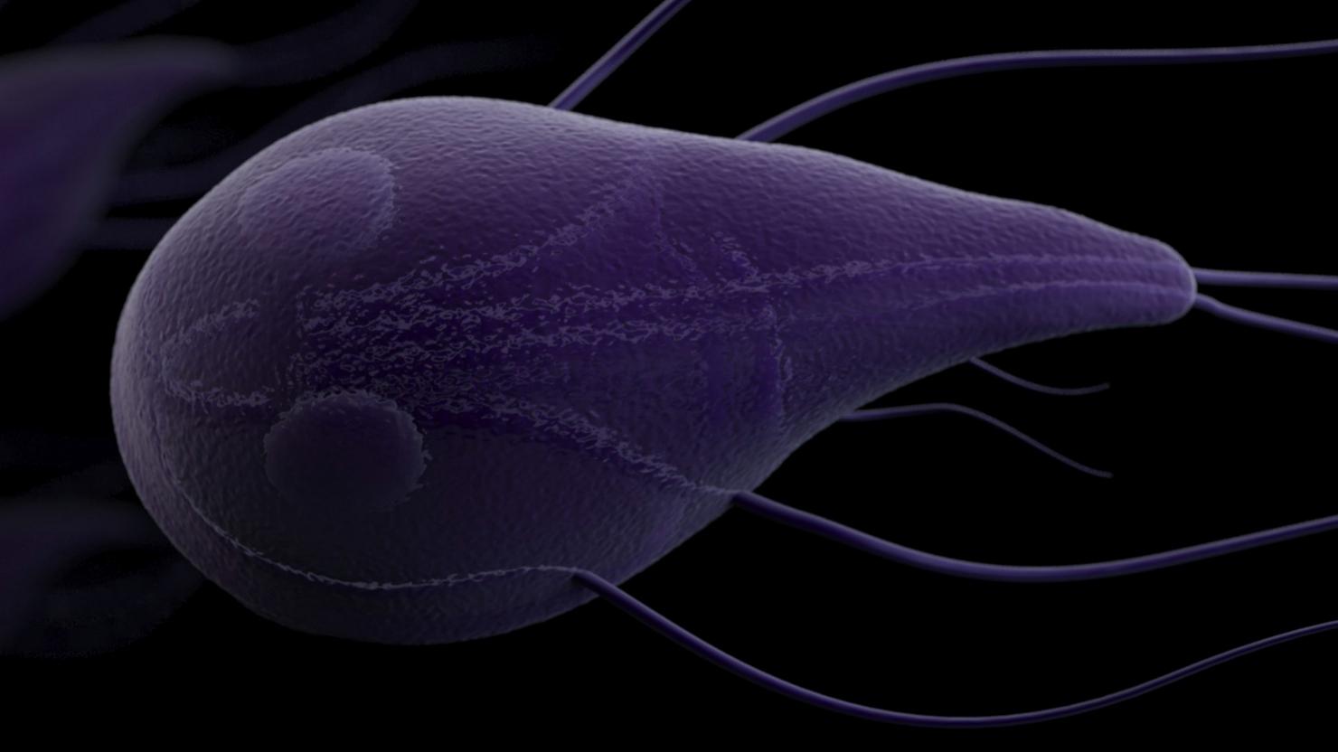 3D artist rendering of a Giardia parasite
