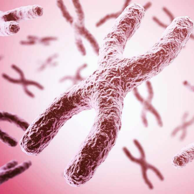 a microscopic image of a chromosomal rearrangement
