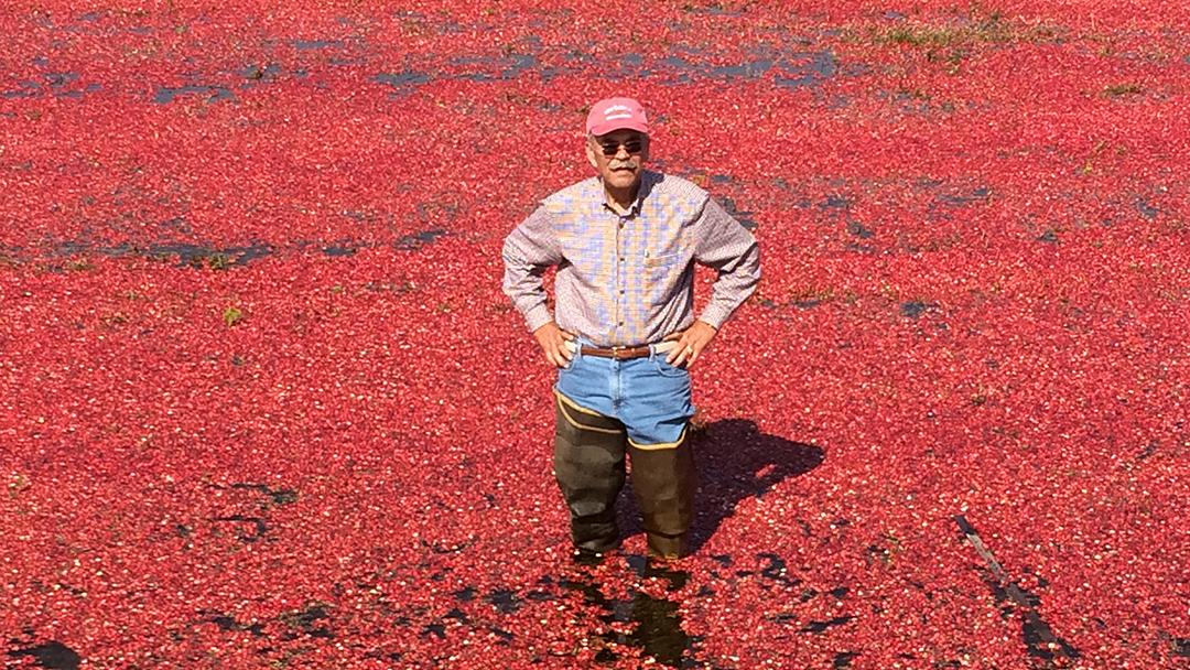 cranberry farmer Guy Gottschalk standing a cranberry bog