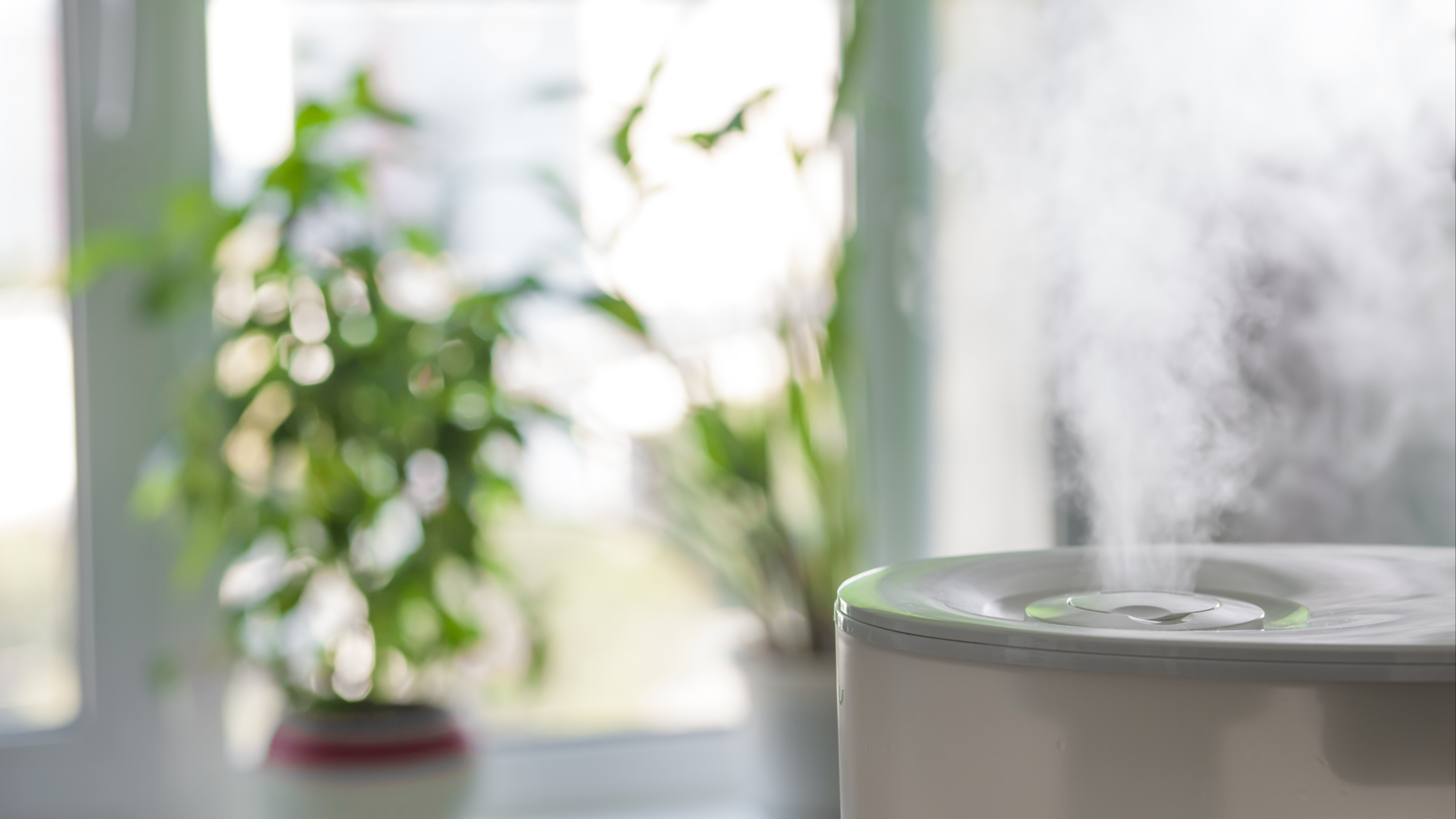 vapor from a humidifier in a bright living room with a window and plants in the background