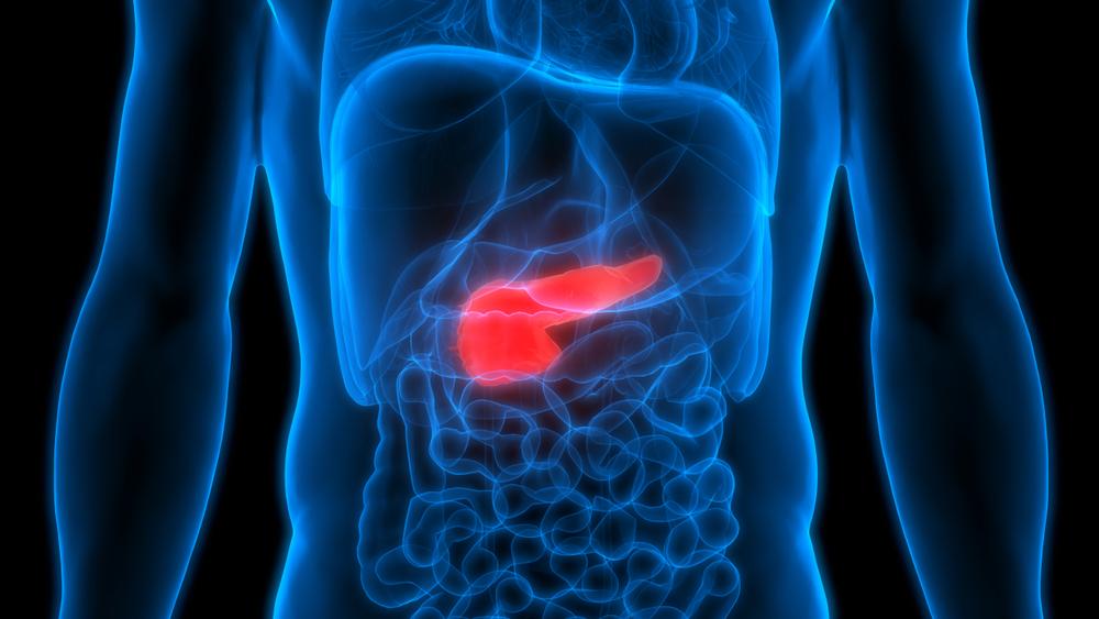 Imagen 3D de abdomen en un cuerpo humano con el páncreas resaltado