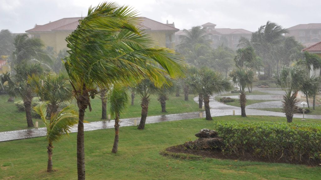 a group of palm trees swaying in the wind and rain, perhaps a tropical storm or hurricane