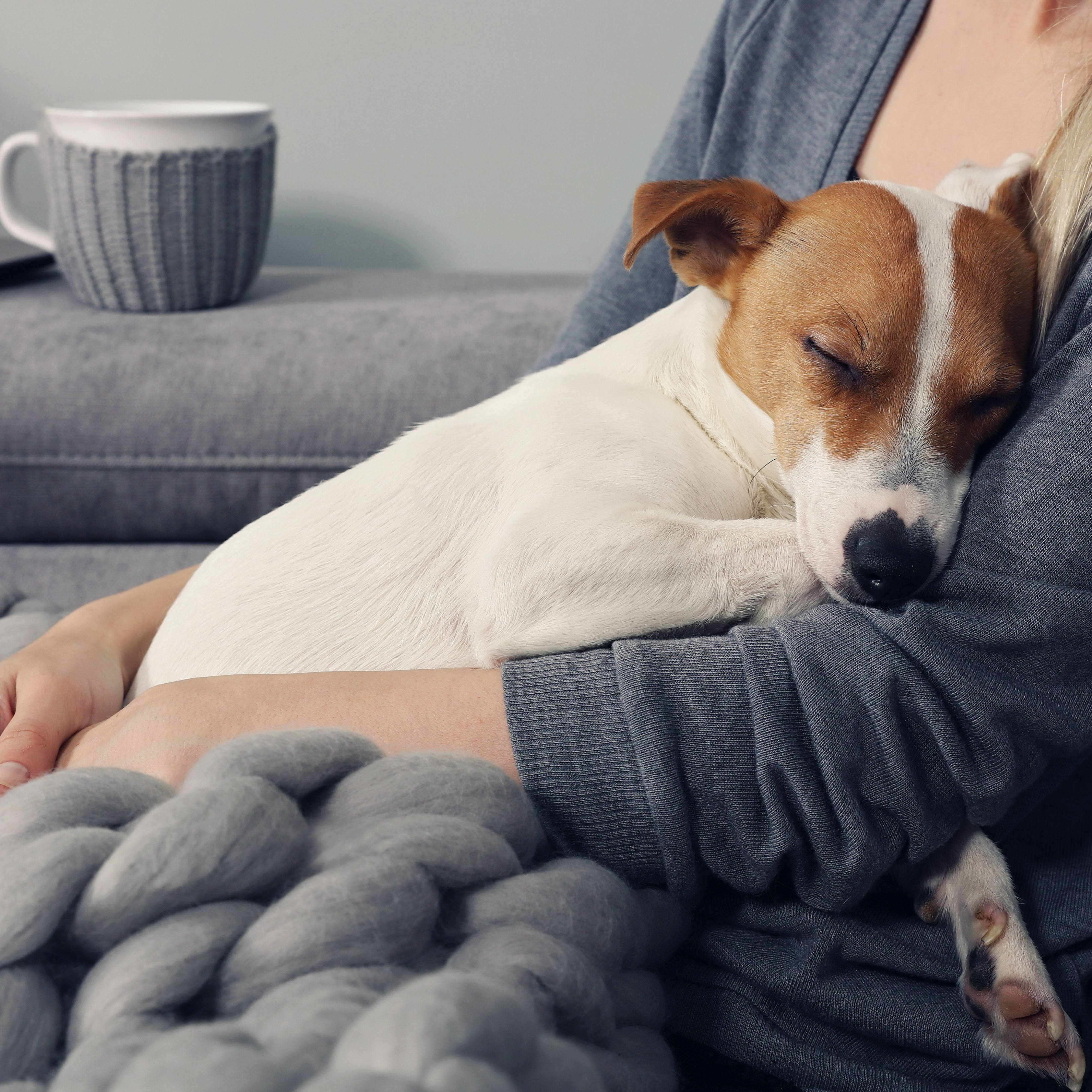 a young woman snuggled up on the couch with a warm blanket, a sleeping dog, and cup of coffee, tea or hot chocolate