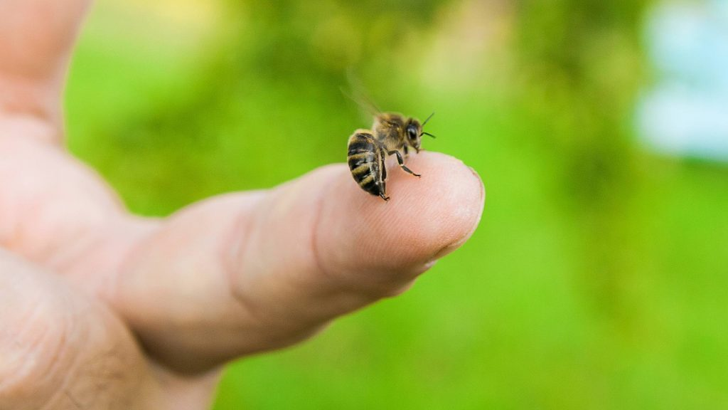 a white person outside with a bee on the tip of their finger