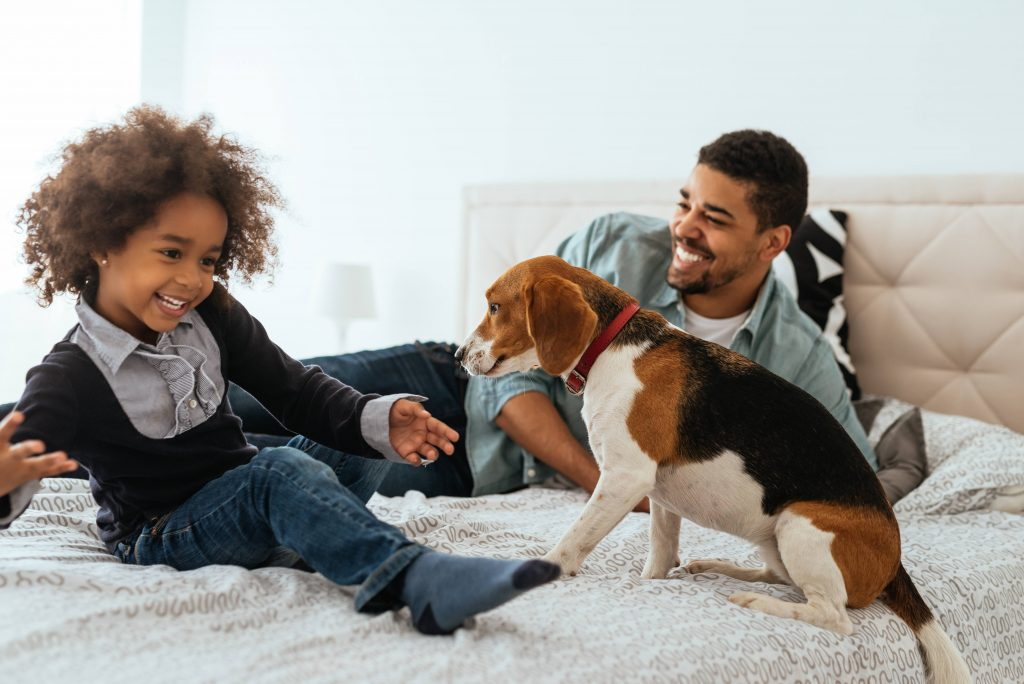 a Black father and young daughter on a bed, laughing and playing with the family dog