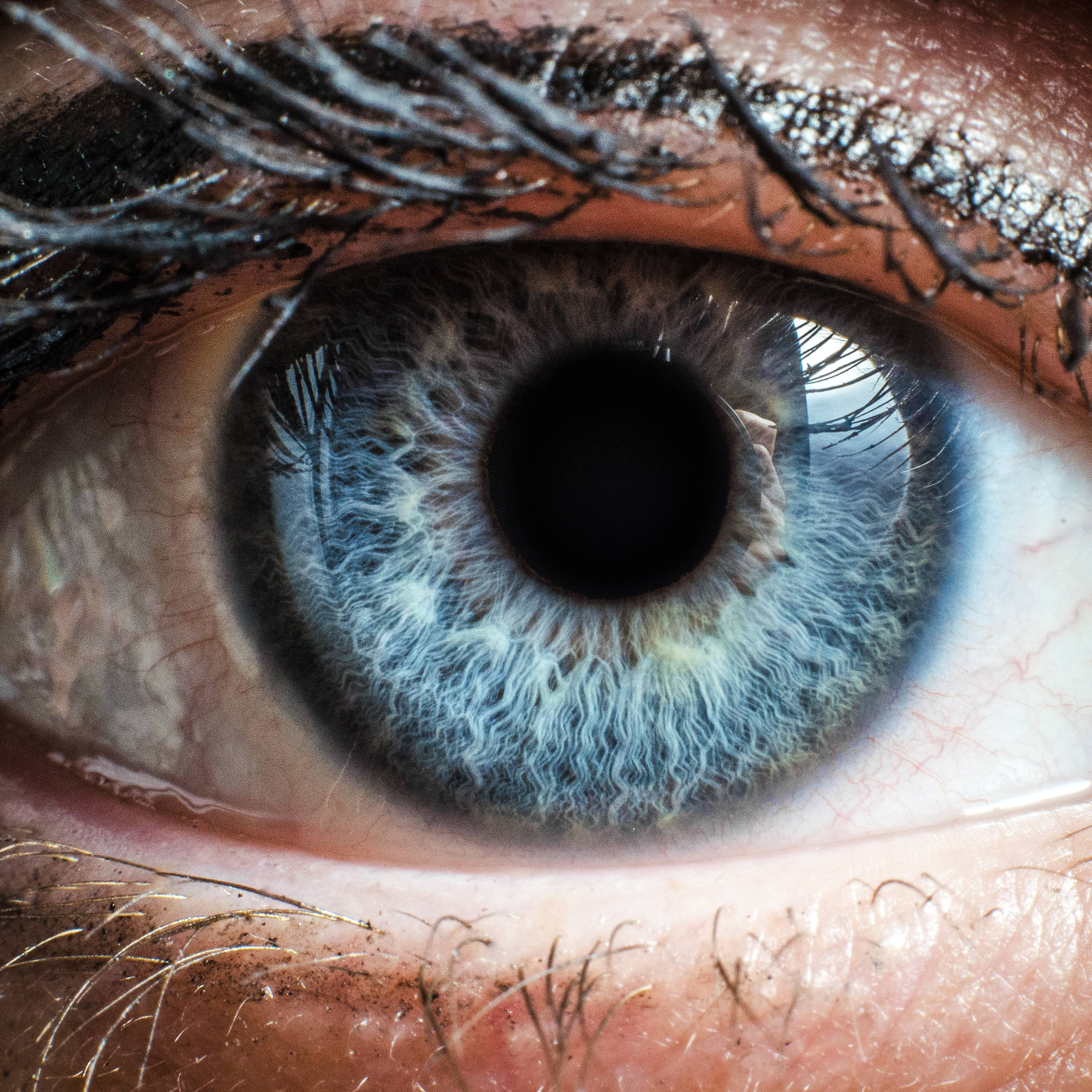 close up of a person's blue eye and eyelashes