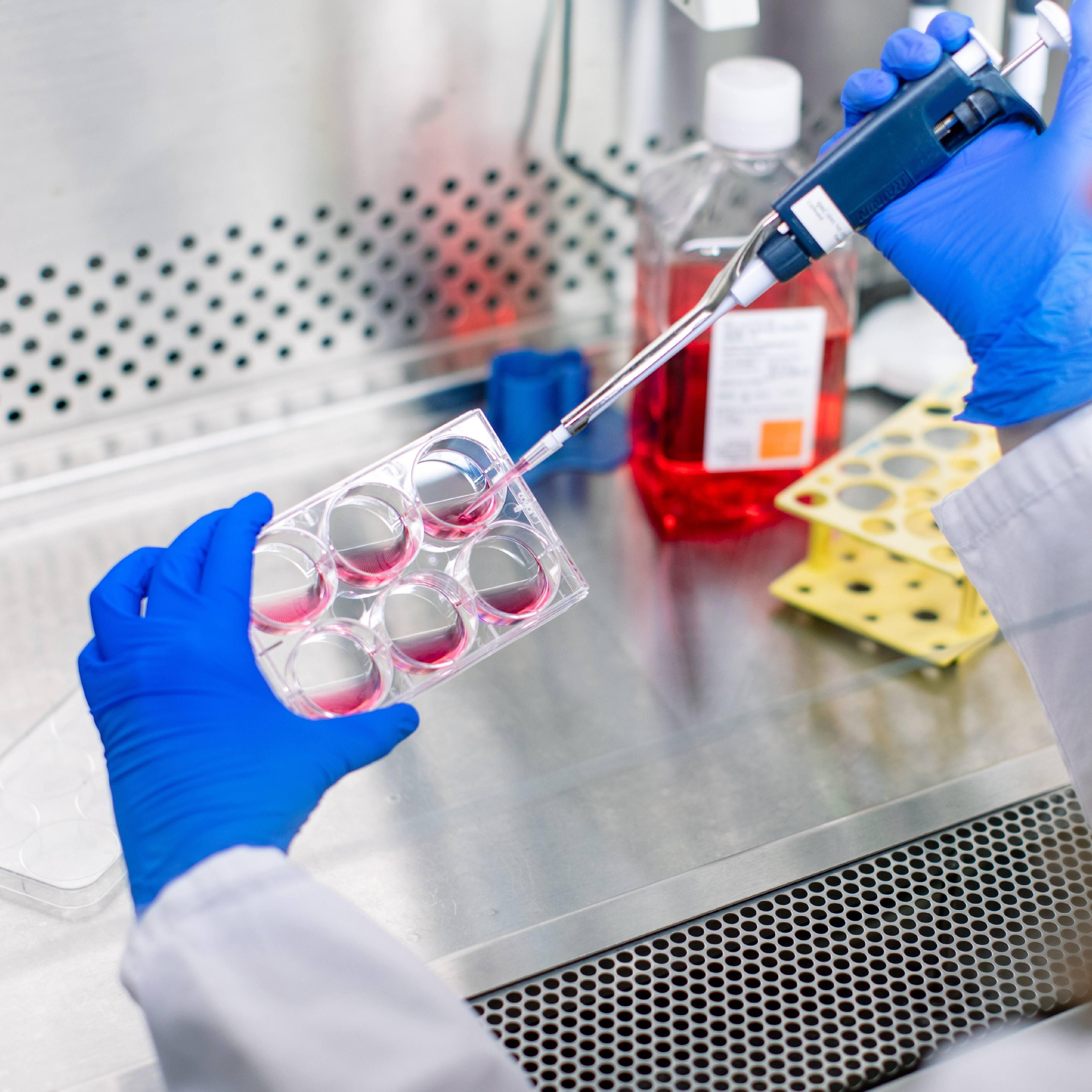 close up medical researcher's hands wearing blue gloves working with specimens in laboratory - Van Cleve Cardiac Regenerative Medicine Program