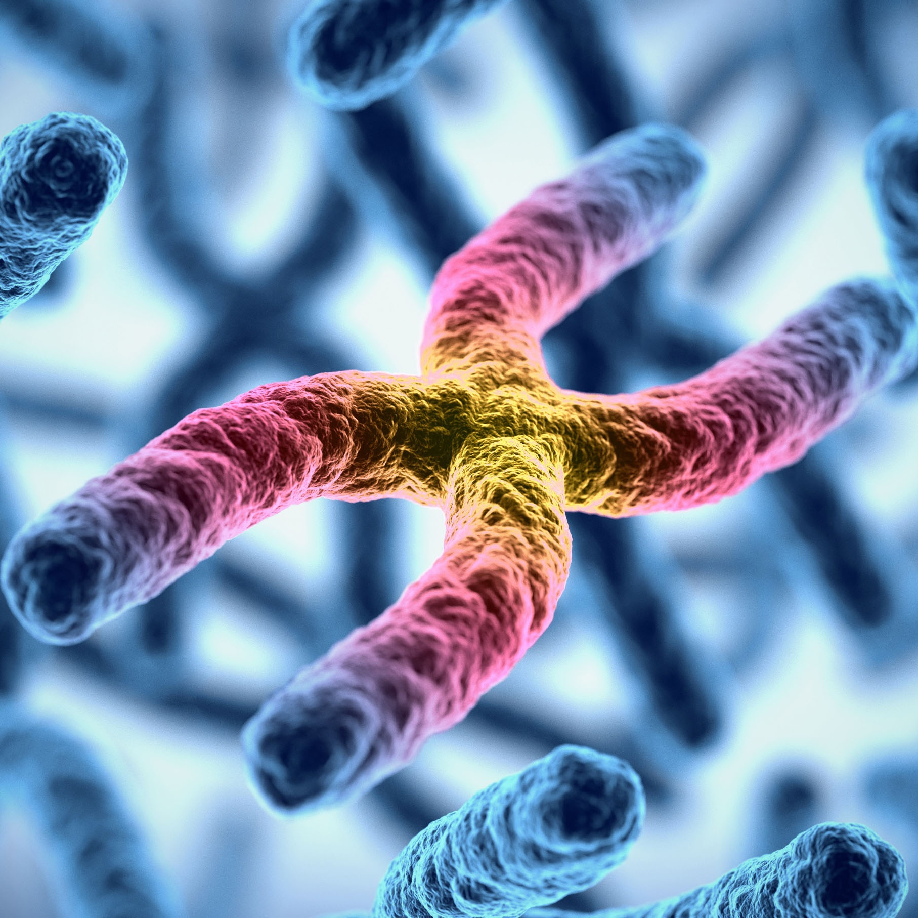 3d medical illustration of chromosomes representing gene therapy 1x1