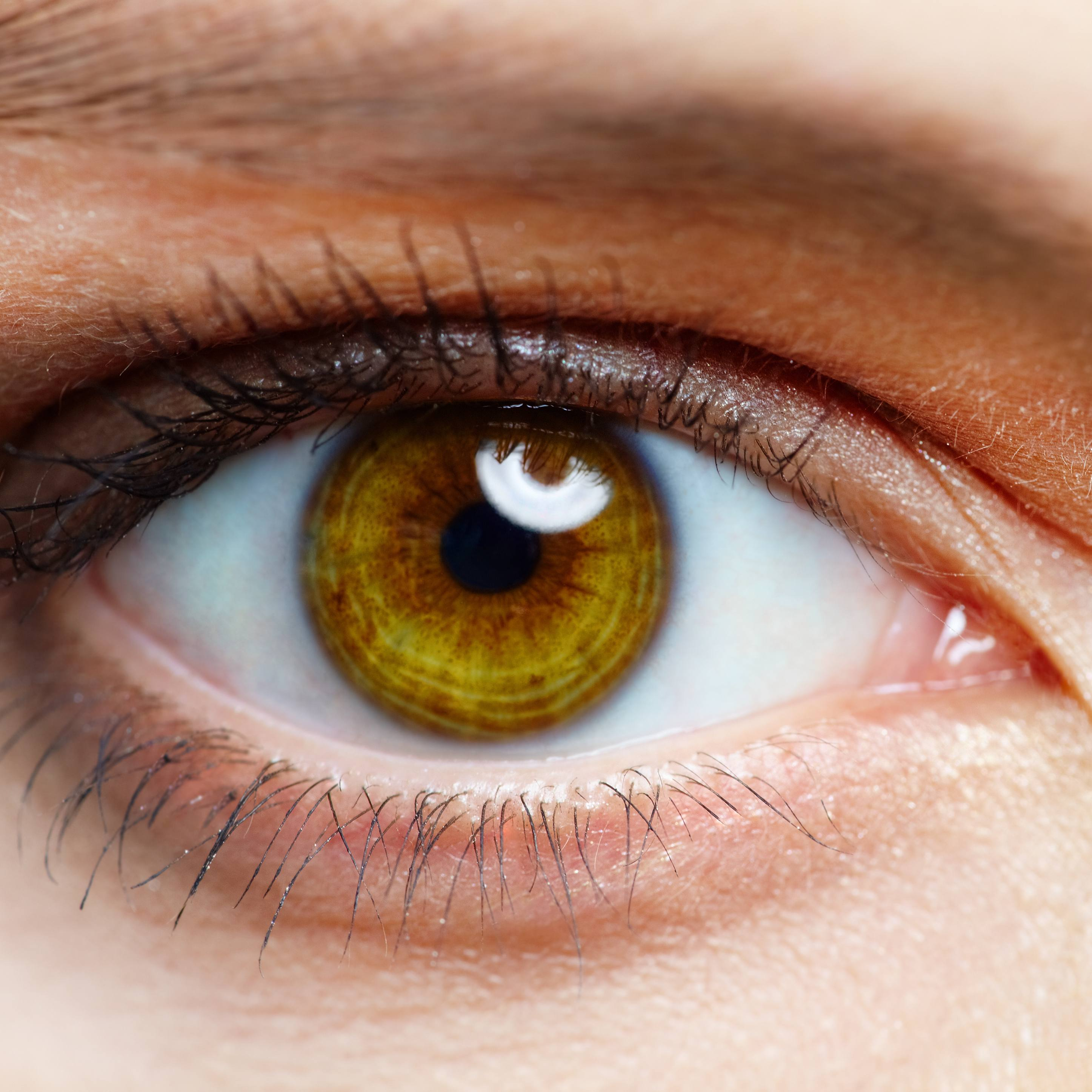 close -up of a person's brown eye