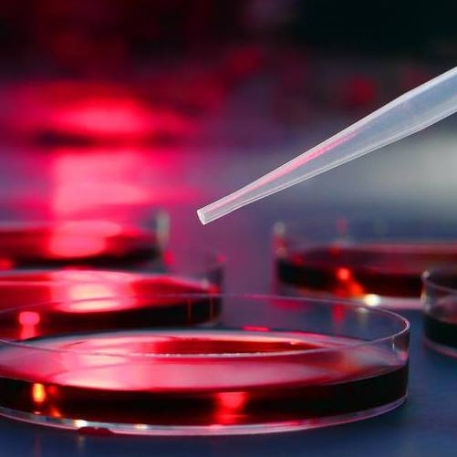 petri dishes with red gel in a research laboratory